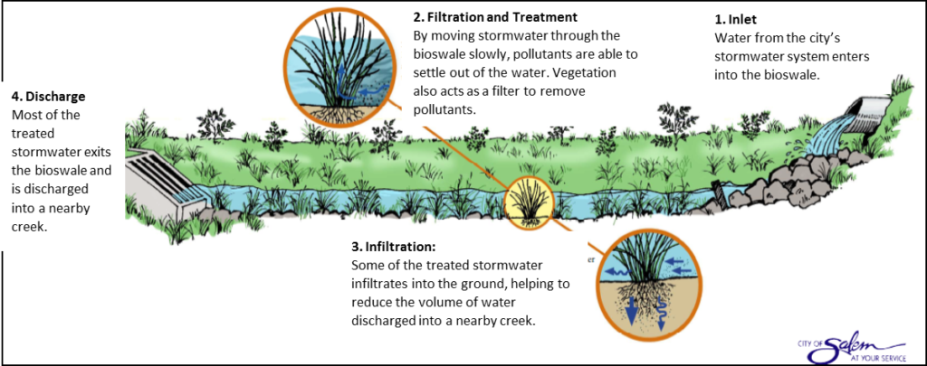 The plants in bioswales can filter pollutants out of runoff and allow more water to infiltrate into the soil. Source: City of Salem Public Works Operations Division, Salem, OR