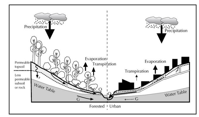 A comparison of the water cycle in a forested and an urban landscape. Rainfall can reach the stream in one of three ways: overland flow (i.e., surface runoff (O)), subsurface flow through topsoil (S), or percolation (P) into groundwater (G).