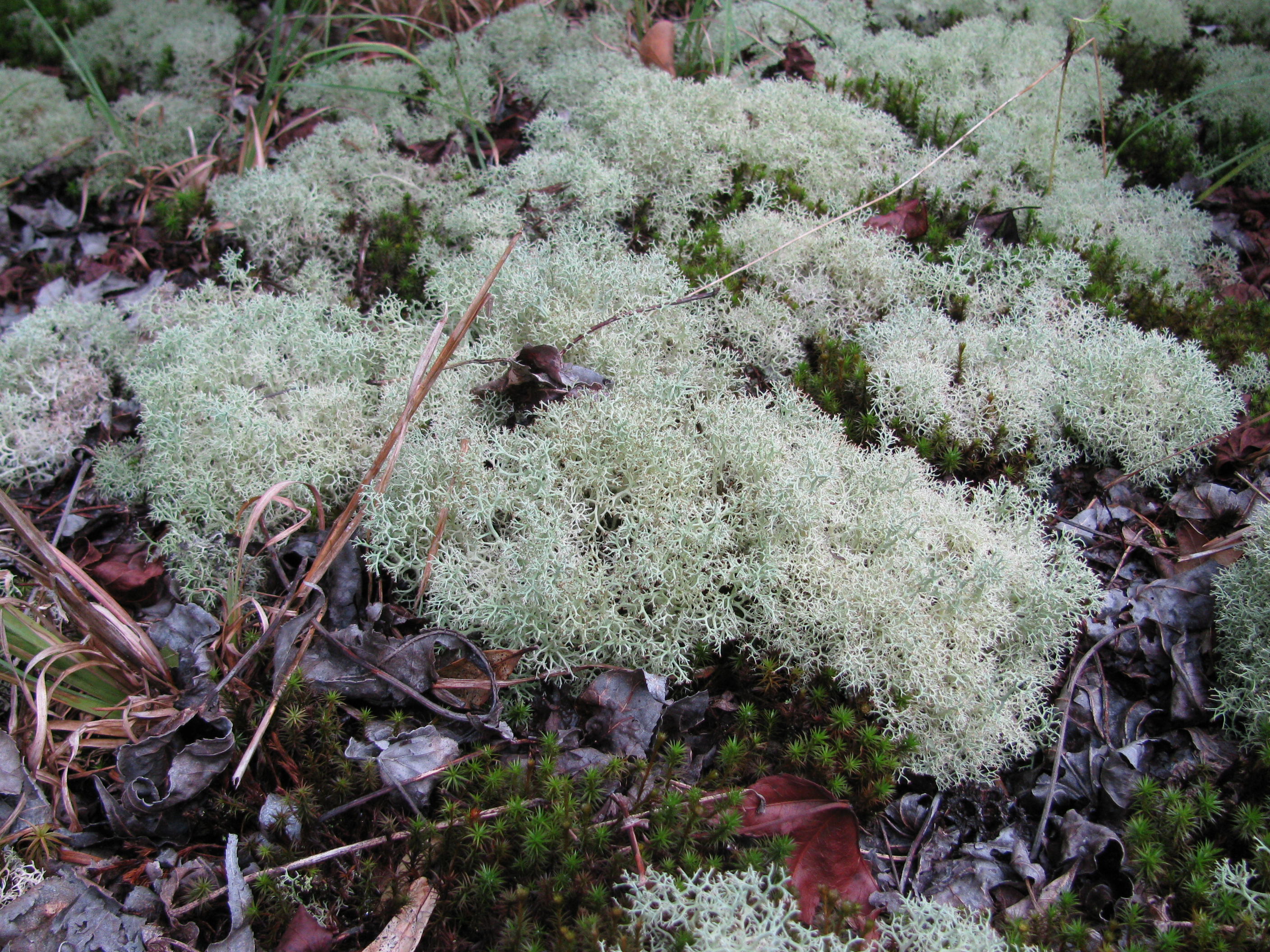 Wetland Plant Series Lichens Phinizy Center For Water