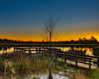 Phinizy Swamp - Top 10 Things to Do in Augusta, Georgia